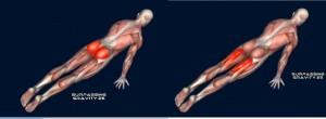 Planche Músculos Trabajados